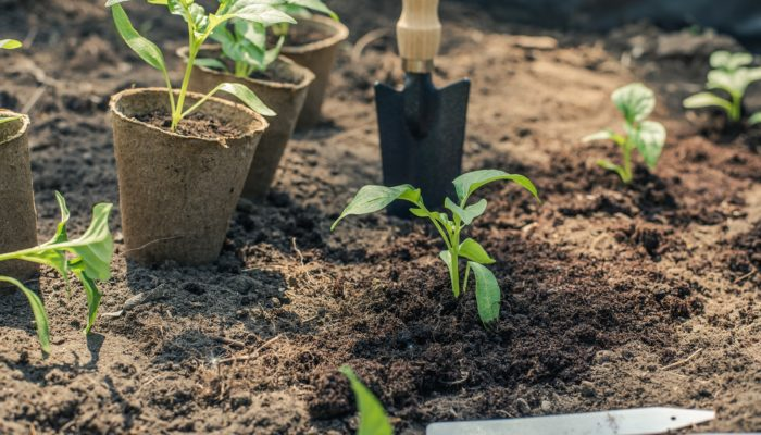 Junge Pflanzen. Neues.